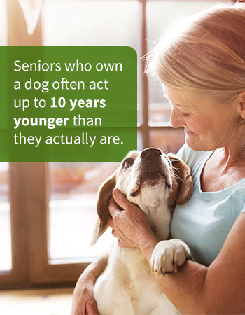 dogs and seniors