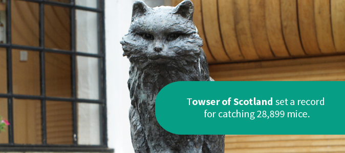 Towser of Scotland