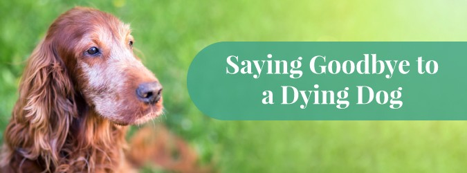 Is My Dog Dying?: Learn the Signs | How to Comfort & Say Goodbye to Your Dog