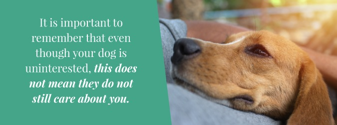 Is My Dog Dying?: Learn the Signs | How to Comfort & Say