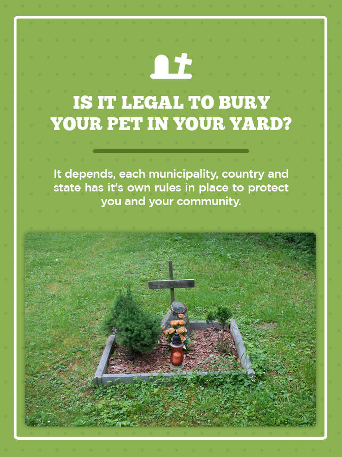 Is It Illegal To Bury Your Dog In Your Backyard - BACKYARD ...